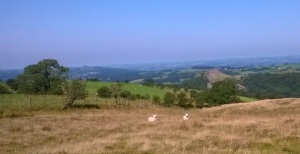 Looking back to Meifod and its famous medieval doctors
