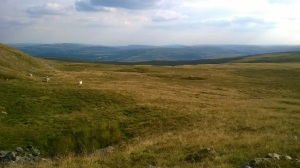 Moorland before the Carmarthenshire Fans